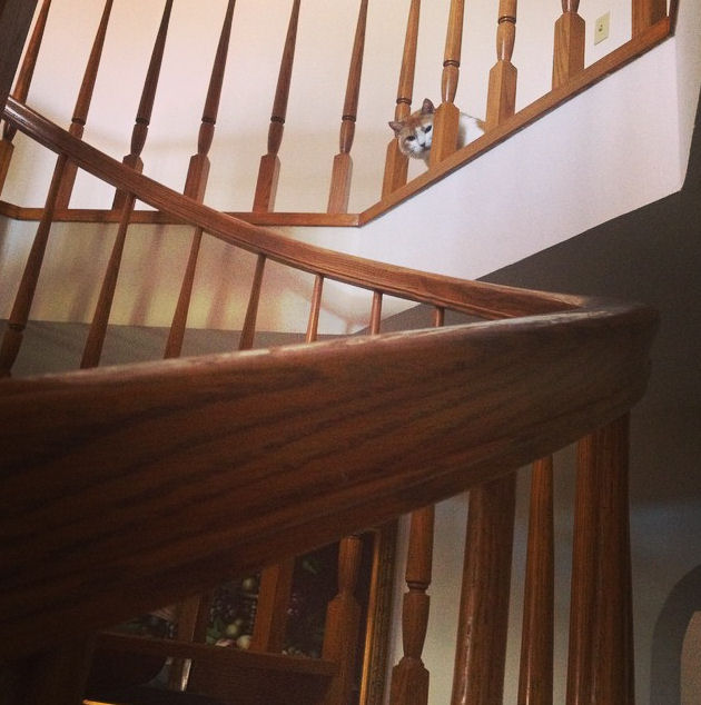 Stairwell and Cat