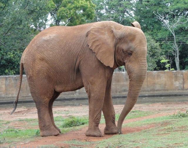 Jardim Zoológico de Brasília, Brasília, Brazil. Source: Daderot via Wikimedia Commons