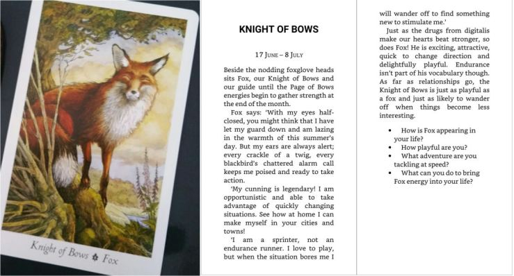 11 Knight of Bows (Wildwood)