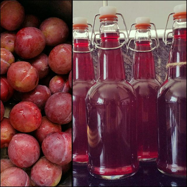 making-plum-cordial